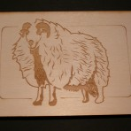Welsh Mountain Badger Faced Sheep Postcard